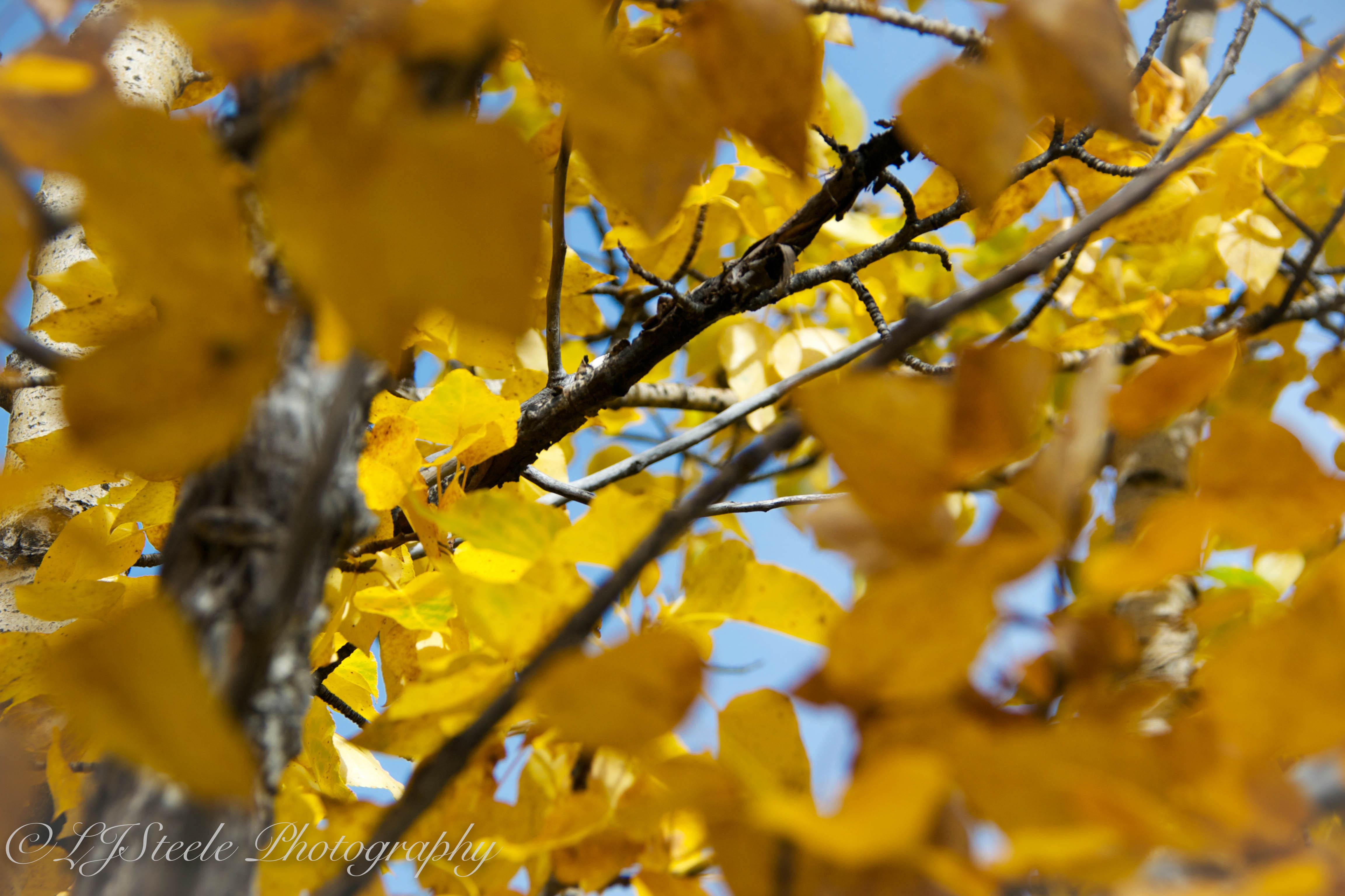 Alaskan Fall Colors