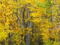 Squirrel Creek, Valdez, Alaska