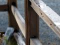 Fences with Dew